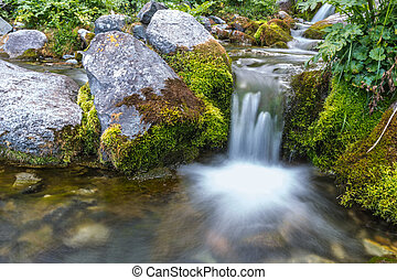 agua, verano, arroyo, corriente, naturaleza
