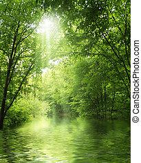 agua, verde, rayo de sol, bosque