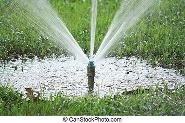 aguando, capim, irrigador