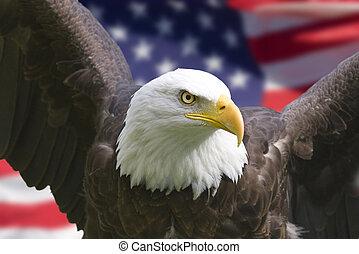 aguila norteamericano, con, bandera