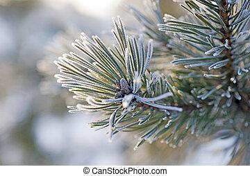 agujas, invierno