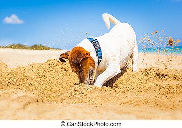 agujero, perro, cavar
