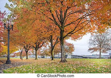 ahorn, træer, ind, portland, downtown, park, ind, fald
