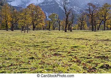 Ahornboden (Maple plain) valley in the Karwendel mountains ...
