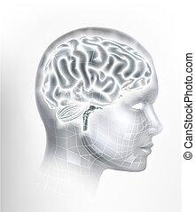 ai, hersenen, menselijk, intelligentie, hoofd, gezicht, concept
