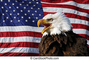 aigle, américain, chauve, drapeau, vocal