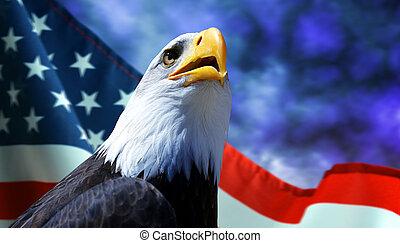 aigle, américain, chauve, flag.