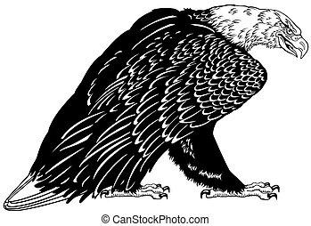 aigle, blanc, chauve, noir