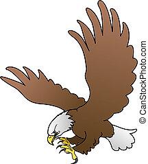 aigle, chauve, ailes, illustration, diffusion