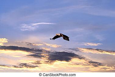 aigle chauve, voler plus, a, ciel coucher soleil