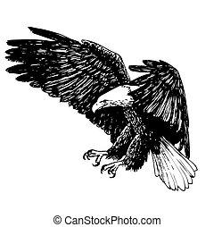 aigle, dessiné, noir, blanc, main