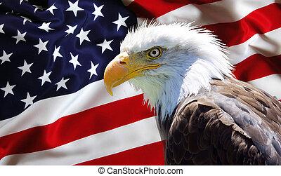 aigle, drapeau, chauve, américain nord