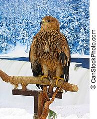 aigle, emplacement, hiver, sur, forêt, fond, soutien