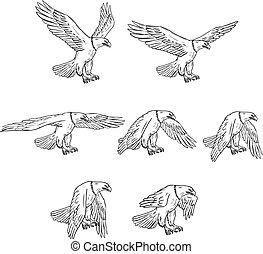 aigle, ensemble, voler, chauve, collection, dessin