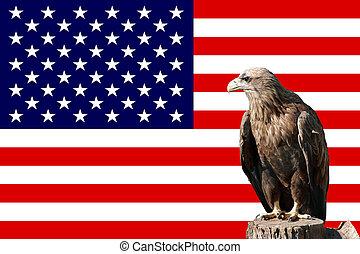 aigle, in-front, drapeau américain