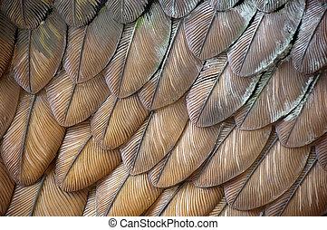 aigle, plumes