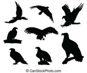 aigle, silhouettes