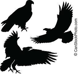 aigle, silhouettes, vecteur