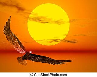 aigle, soleil