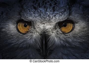 aigle, tête, écologie, détail, hibou, plumage, agréable