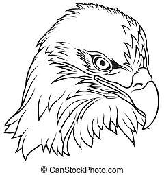 aigle, tête, chauve