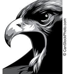 aigle, tête, noir, blanc