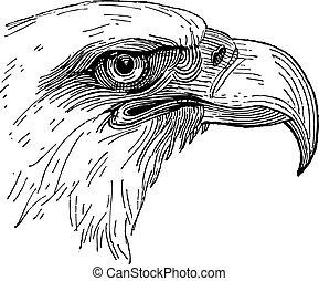 aigle, tête, vecteur