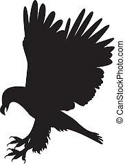 aigle, vecteur