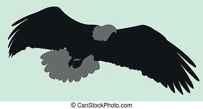aigle, vecteur, silhouette, illustration