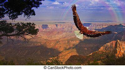 aigle, vol, prend, usa, sur, canyon, grandiose