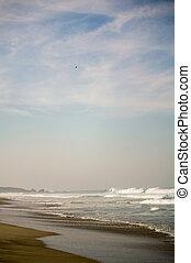 aigle, zicatela, mexique, ciel, escondido, puerto, plage