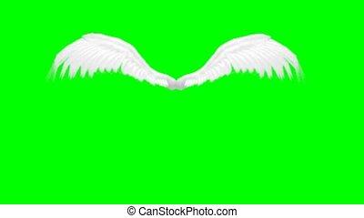 ailes, ange, animé