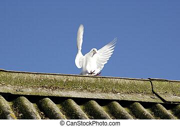 ailes, de, paix