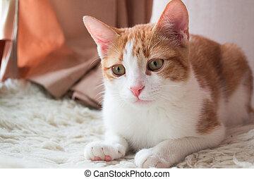 aimable, rouges, chat, sur, fourrure, moquette