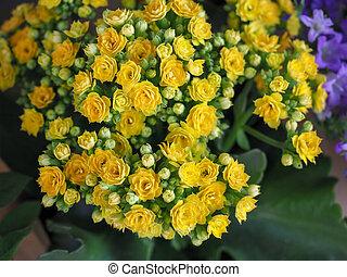 aimer, bouquet, jaune, buisson, petit, fleurs