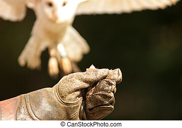 aimg, 0665, hibou, atterrissage