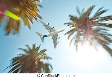 Air plane above palm trees.