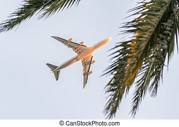 Airplane framed by palm trees