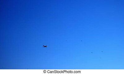 Airplane silhouette in the blue sky getting ready to land. Birds fly nearby