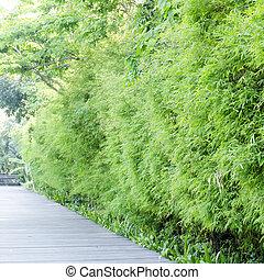 aisa Bamboo groves