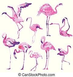 aislado, blanco, flamenco rosa, hermoso