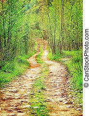 aislado, caduco, bosque, camino