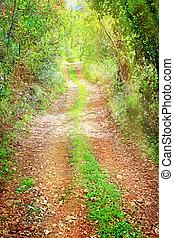 aislado, caduco, bosque, sendero