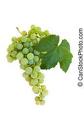 aislado, grupo, de, uvas