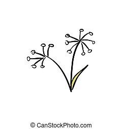 aislado, hinojo, plano de fondo, salvaje, blanco, ramo