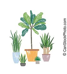 aislado, houseplants, vector, blanco, fondo., natural, ...