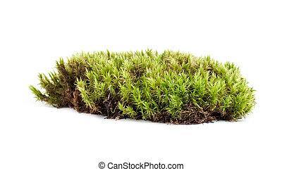 aislado, musgo de sphagnum, fondo verde, blanco