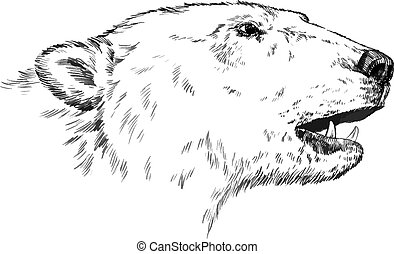 aislado, oso, vector, negro, grabar, blanco