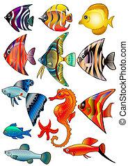 aislado, peces blancos, plano de fondo, kit