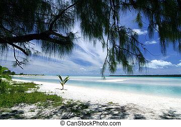Aitutaki lagoon - What a marvellous lagoon! Crystal clear...